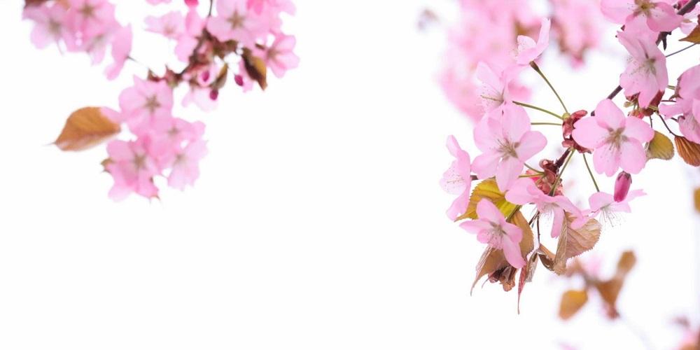 春休みから始める家庭教師との学習